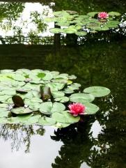 Classical Chinese Garden, Portland.