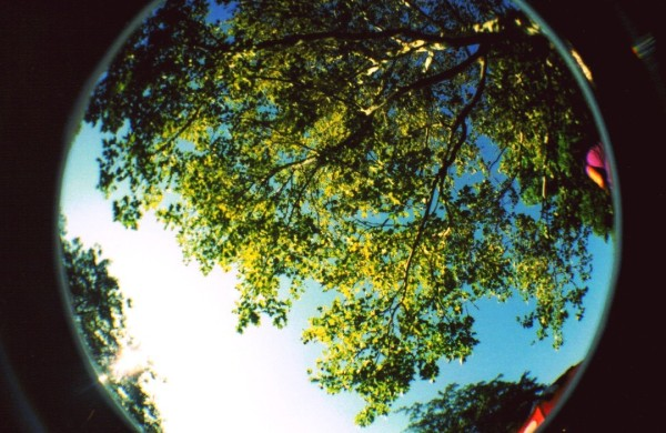 trees fisheye lens