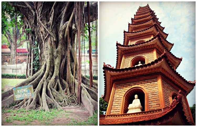Tree (Temple of Literature) and Tran Quoc Pagoda (West Lake)