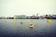 Yellow Lotus Flowers on West Lake