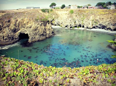 A milky turquoise sea along the headlands in Mendocino.