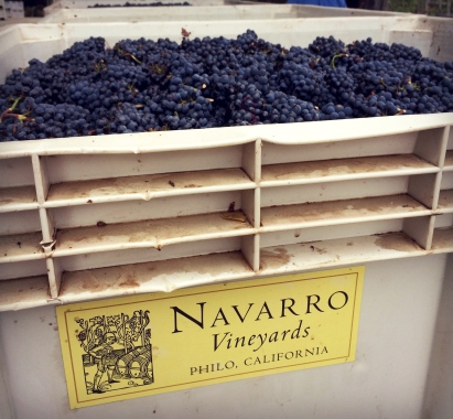 Pinot grapes at Navarro Vineyards.