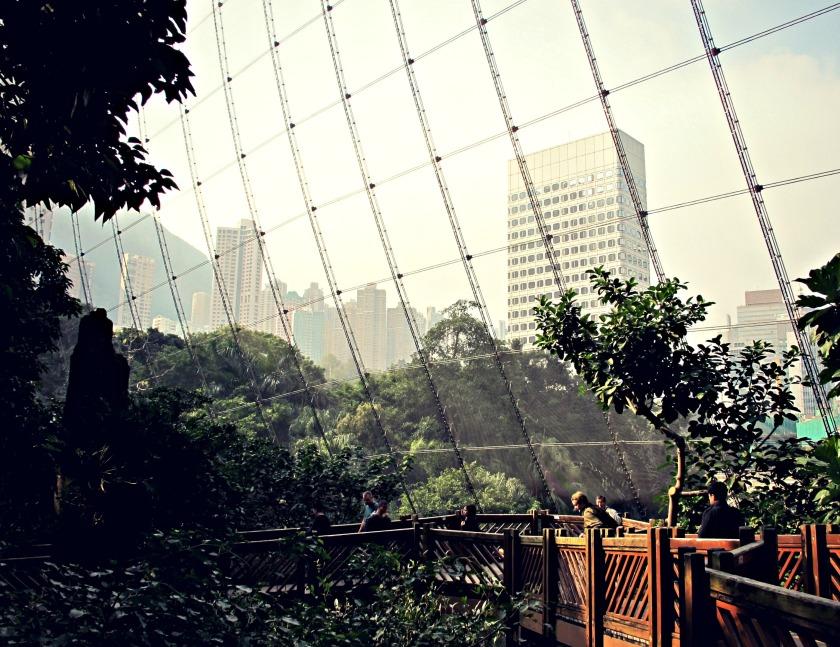 The aviary at Hong Kong Park.