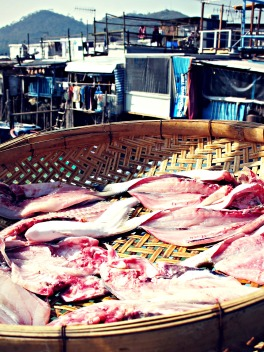 Sliced fish, drying in a basket on a bridge in Tai O fishing village.