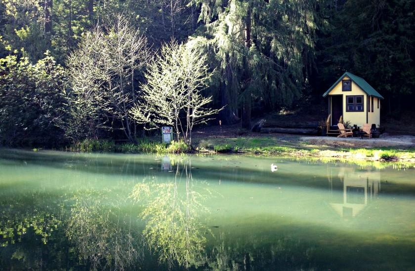 tiny house by pond