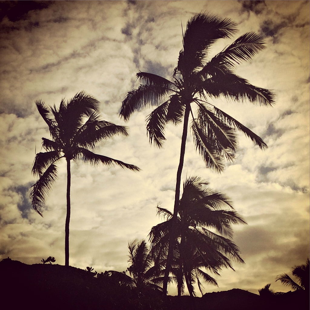 Palm tree silhouettes at dusk on Lanikai Beach.