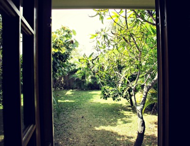 View of backyard from inside the Coconut.