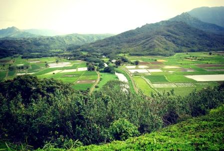 Taro Ponds, Hanalei, Kauai