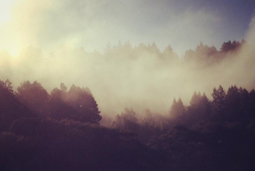 fog-cropped