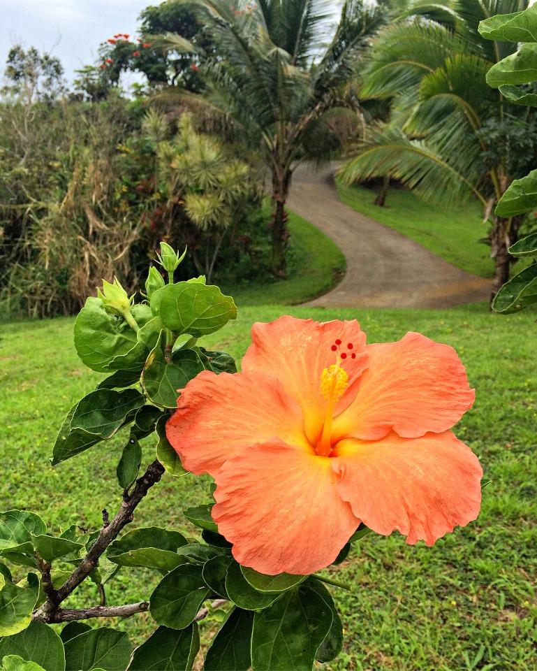 A shot on the grounds of Umauna Falls.