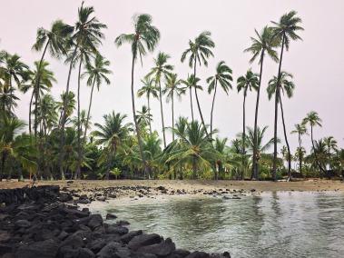 Trees at Pu`uhonua O Hōnaunau National Historical Park on a rainy day.