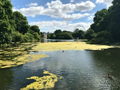 Buckingham Palace Gardens, London