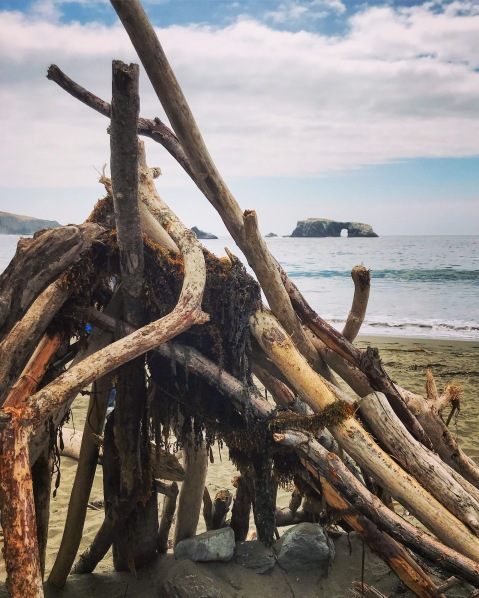Goat Rock Beach, Sonoma Coast